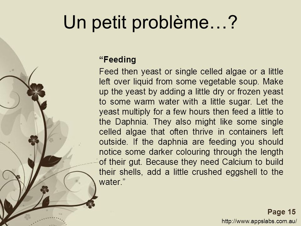 Free Powerpoint TemplatesPage 15 Un petit problème…? Feeding Feed then yeast or single celled algae or a little left over liquid from some vegetable s