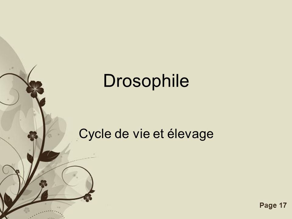 Free Powerpoint TemplatesPage 17 Drosophile Cycle de vie et élevage