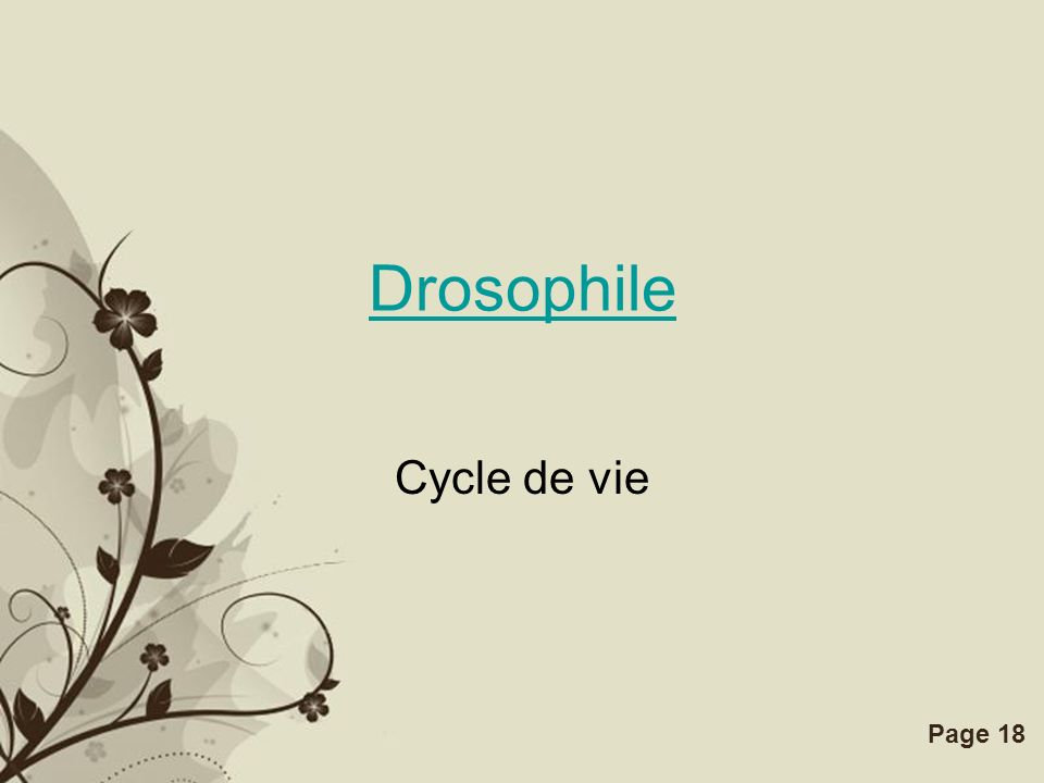 Free Powerpoint TemplatesPage 18 Drosophile Cycle de vie