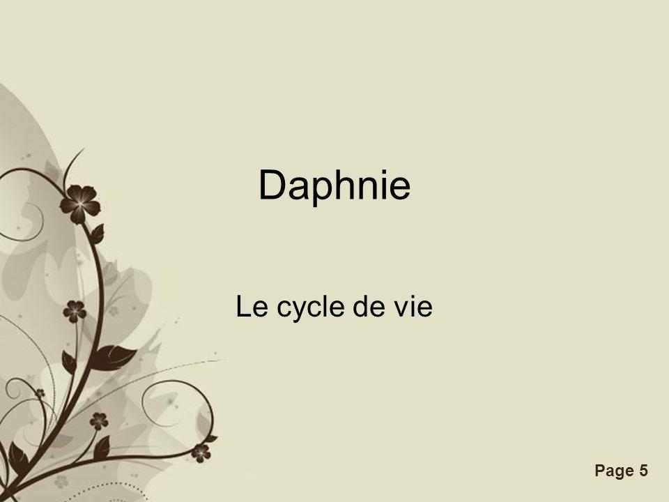 Free Powerpoint TemplatesPage 5 Daphnie Le cycle de vie