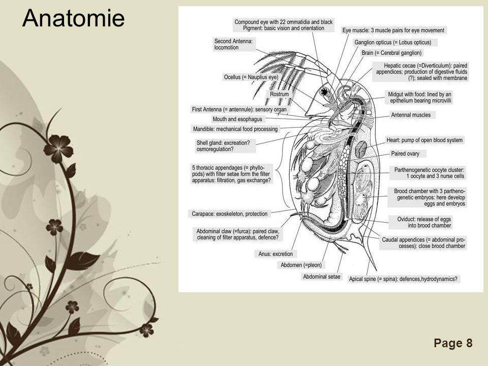 Free Powerpoint TemplatesPage 8 Anatomie