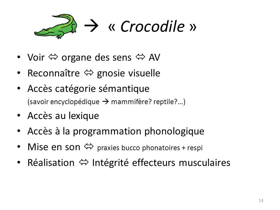 « Crocodile » Voir organe des sens AV Reconnaître gnosie visuelle Accès catégorie sémantique (savoir encyclopédique mammifère? reptile?…) Accès au lex