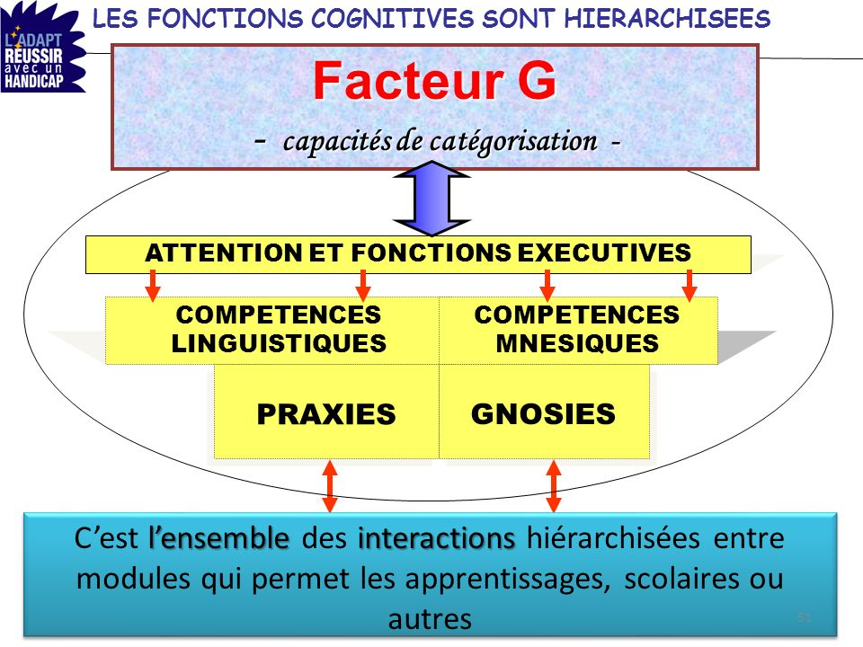LES FONCTIONS COGNITIVES SONT HIERARCHISEES ATTENTION ET FONCTIONS EXECUTIVES COMPETENCES LINGUISTIQUES COMPETENCES MNESIQUES PRAXIES GNOSIES lensembl