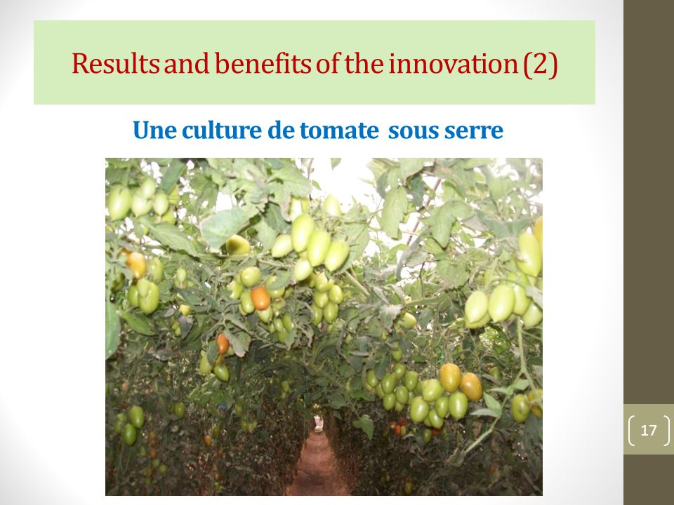 Une culture de tomate sous serre 17 Results and benefits of the innovation (2)
