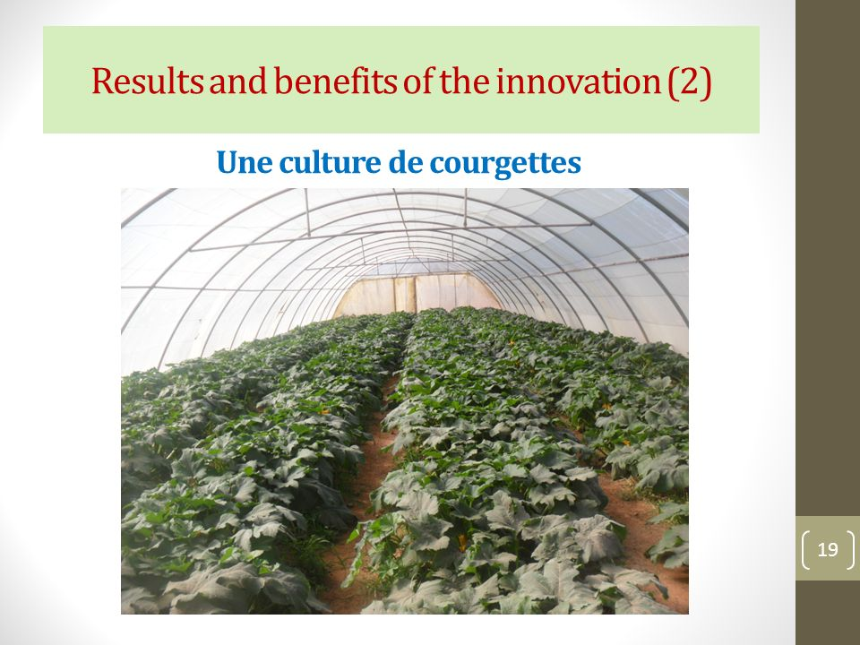 Une culture de courgettes 19 Results and benefits of the innovation (2)