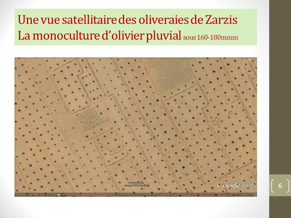 Une vue satellitaire des oliveraies de Zarzis La monoculture dolivier pluvial sous 160-180mmm 6