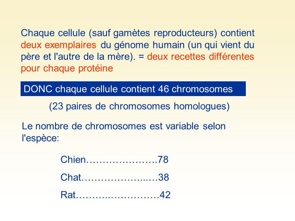 Chaque cellule (sauf gamètes reproducteurs) contient deux exemplaires du génome humain (un qui vient du père et l'autre de la mère). = deux recettes d