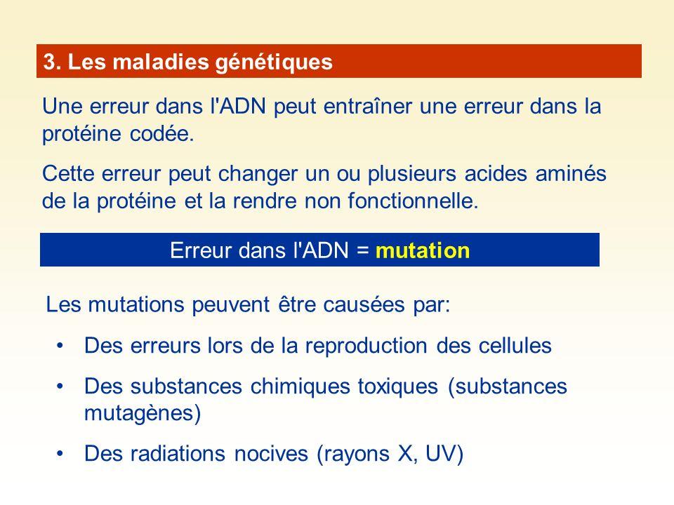 3. Les maladies génétiques Une erreur dans l'ADN peut entraîner une erreur dans la protéine codée. Cette erreur peut changer un ou plusieurs acides am