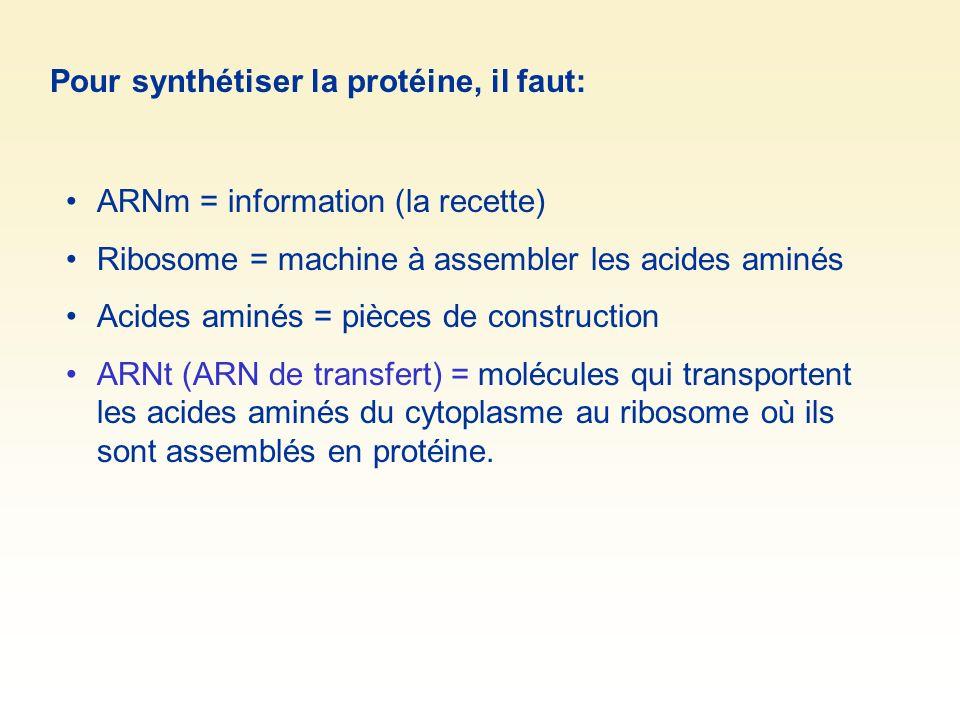 Pour synthétiser la protéine, il faut: ARNm = information (la recette) Ribosome = machine à assembler les acides aminés Acides aminés = pièces de cons