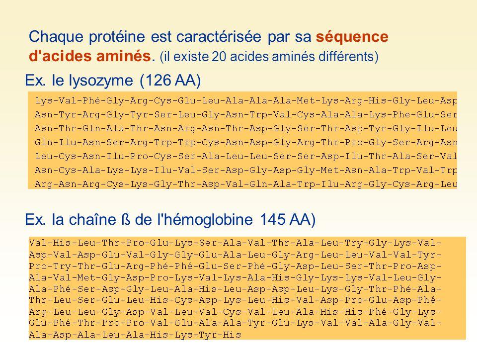 Chaque protéine est caractérisée par sa séquence d'acides aminés. (il existe 20 acides aminés différents) Ex. la chaîne ß de l'hémoglobine 145 AA) Ex.