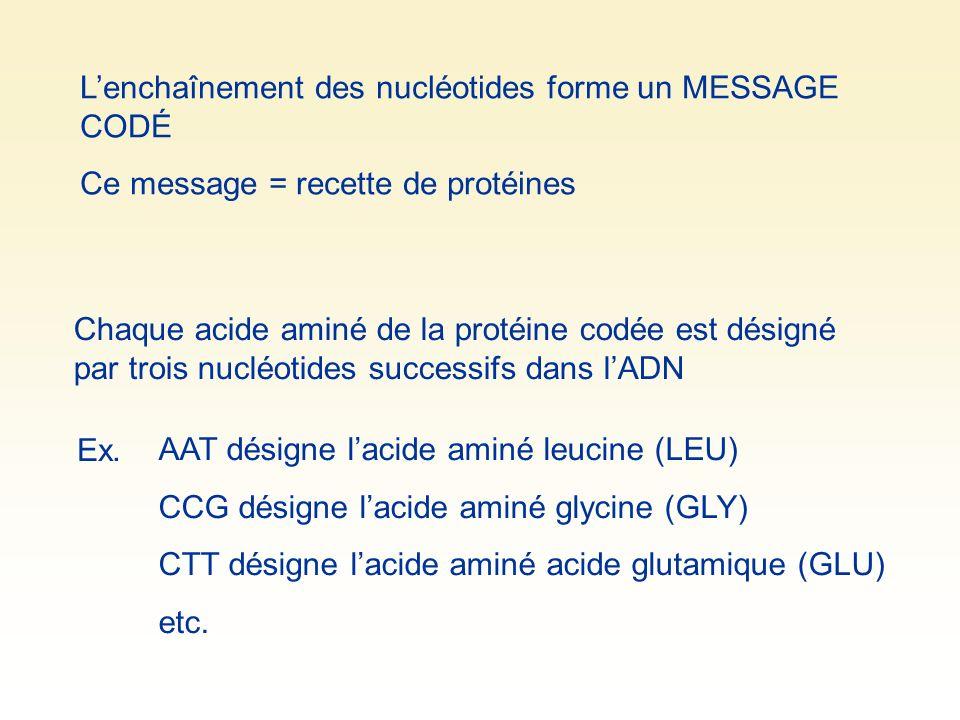 Lenchaînement des nucléotides forme un MESSAGE CODÉ Ce message = recette de protéines Chaque acide aminé de la protéine codée est désigné par trois nu