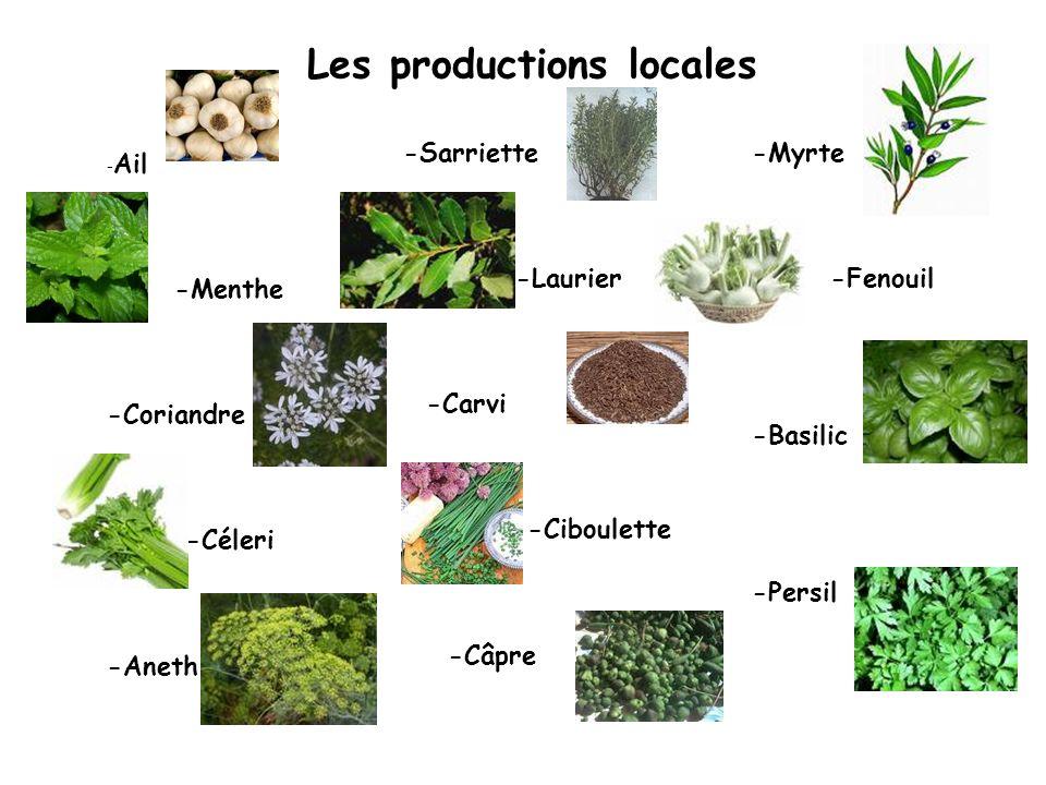 Les productions locales - Ail -Menthe -Coriandre -Céleri -Aneth -Sarriette -Laurier -Carvi -Ciboulette -Câpre -Myrte -Fenouil -Basilic -Persil