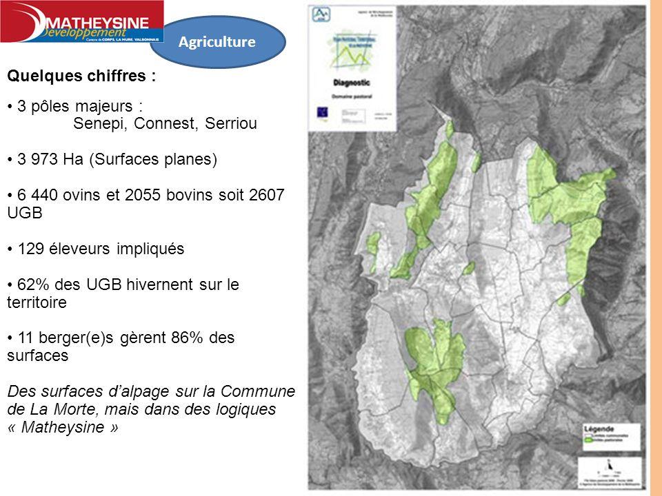 Agriculture Quelques chiffres : 3 pôles majeurs : Senepi, Connest, Serriou 3 973 Ha (Surfaces planes) 6 440 ovins et 2055 bovins soit 2607 UGB 129 éle