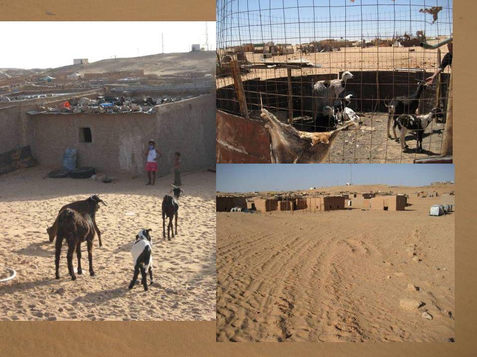 Sans eau courante ni électricité, avec peu daccès au travail et à léducation, les réfugiés sahraouis vivent dans une extrême précarité.