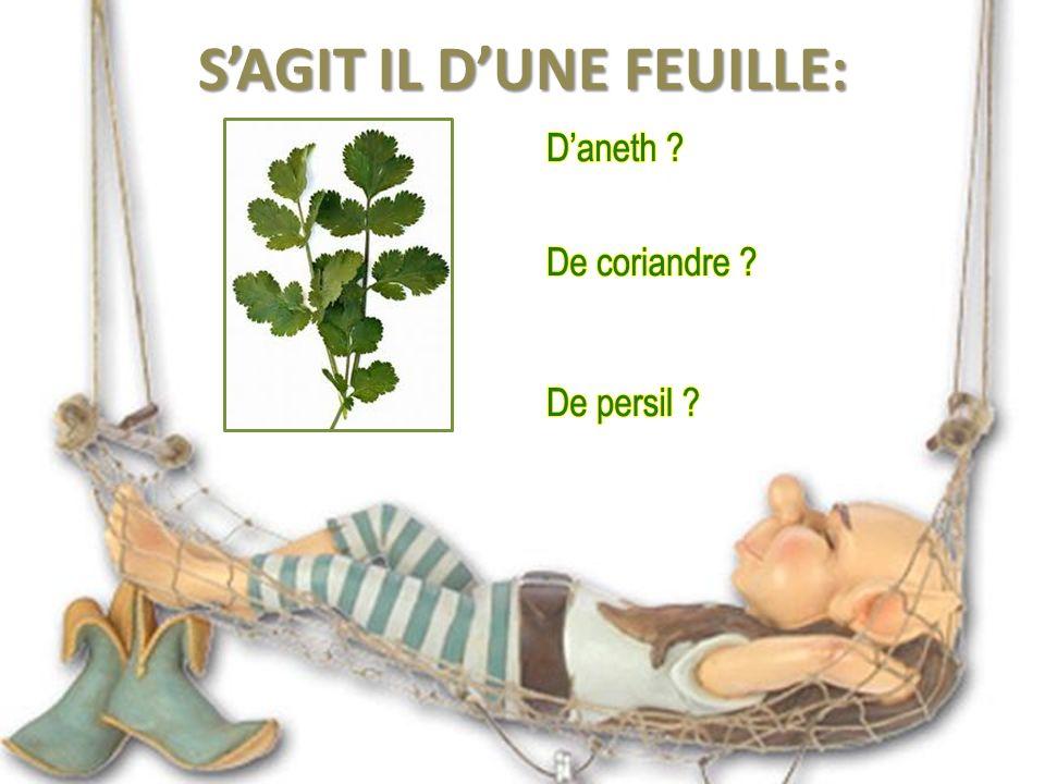 La Sarriette, parfois appelée Pèbre d ai (qui signifie en provençal « poivre d âne » ; est un genre de plantes vivaces aromatiques de la famille des Lamiacées, que l on trouve sur les bords des chemins méditerranéens.