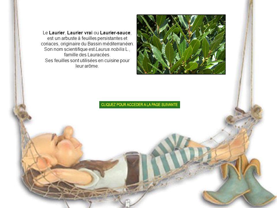 La bourrache officinale (Borago officinalis L.) est une plante annuelle de la famille des Boraginacées assez commune en Europe..Les jardiniers apprécient son effet répulsif sur les limaces.
