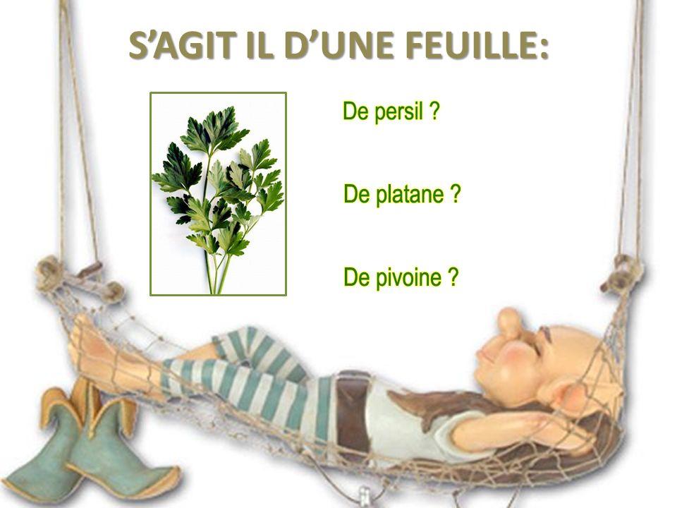 Le Laurier, Laurier vrai ou Laurier-sauce, est un arbuste à feuilles persistantes et coriaces, originaire du Bassin méditerranéen.