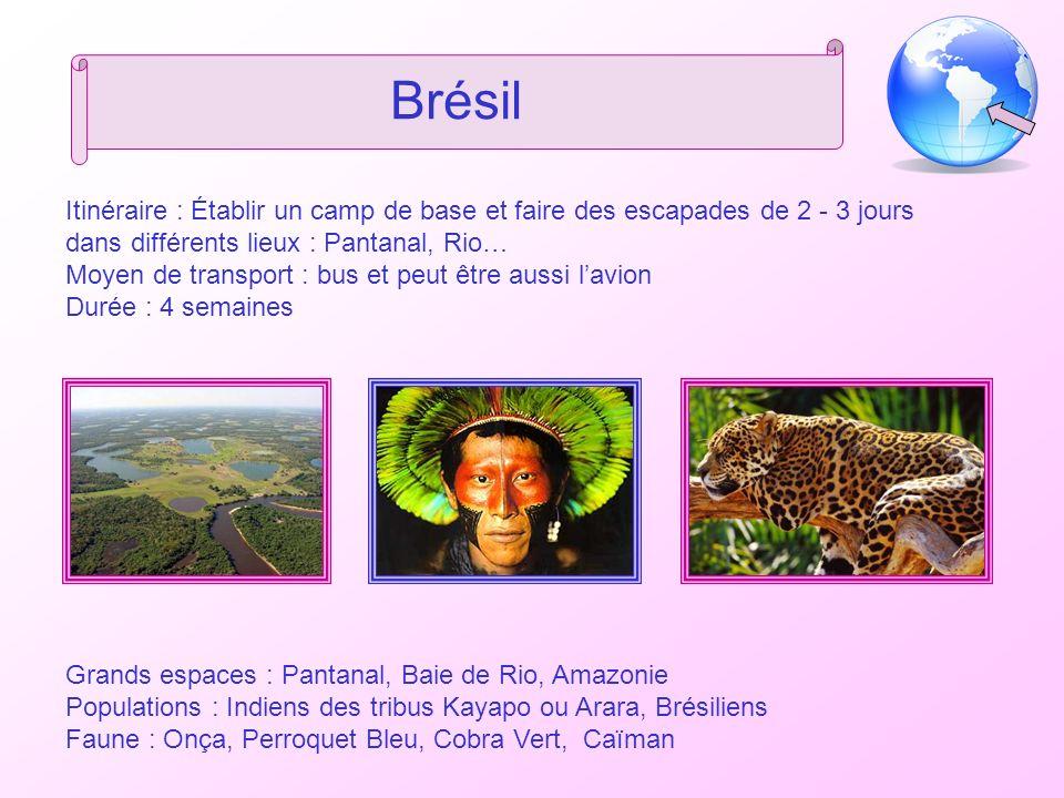 Brésil Itinéraire : Établir un camp de base et faire des escapades de 2 - 3 jours dans différents lieux : Pantanal, Rio… Moyen de transport : bus et p