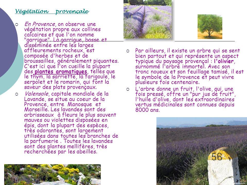 Végétation provençale En Provence, on observe une végétation propre aux collines calcaires et que l'on nomme