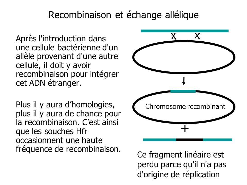 Recombinaison et échange allélique Après l'introduction dans une cellule bactérienne d'un allèle provenant d'une autre cellule, il doit y avoir recomb