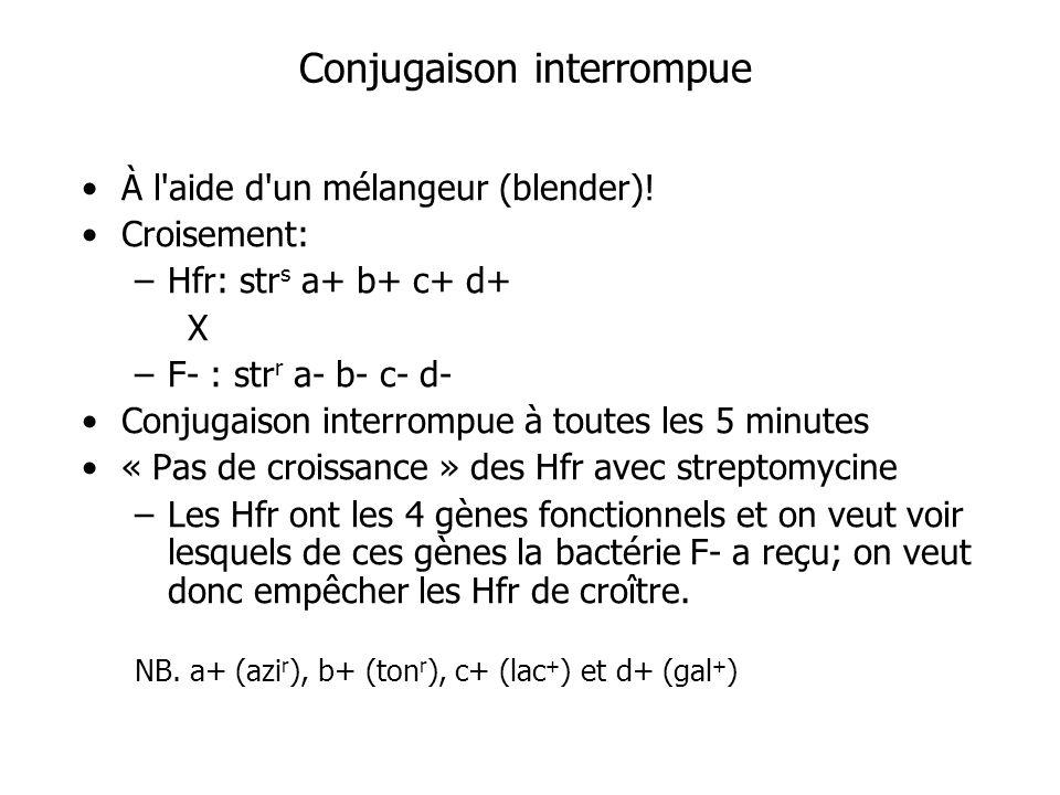 Conjugaison interrompue À l'aide d'un mélangeur (blender)! Croisement: –Hfr: str s a+ b+ c+ d+ X –F- : str r a- b- c- d- Conjugaison interrompue à tou
