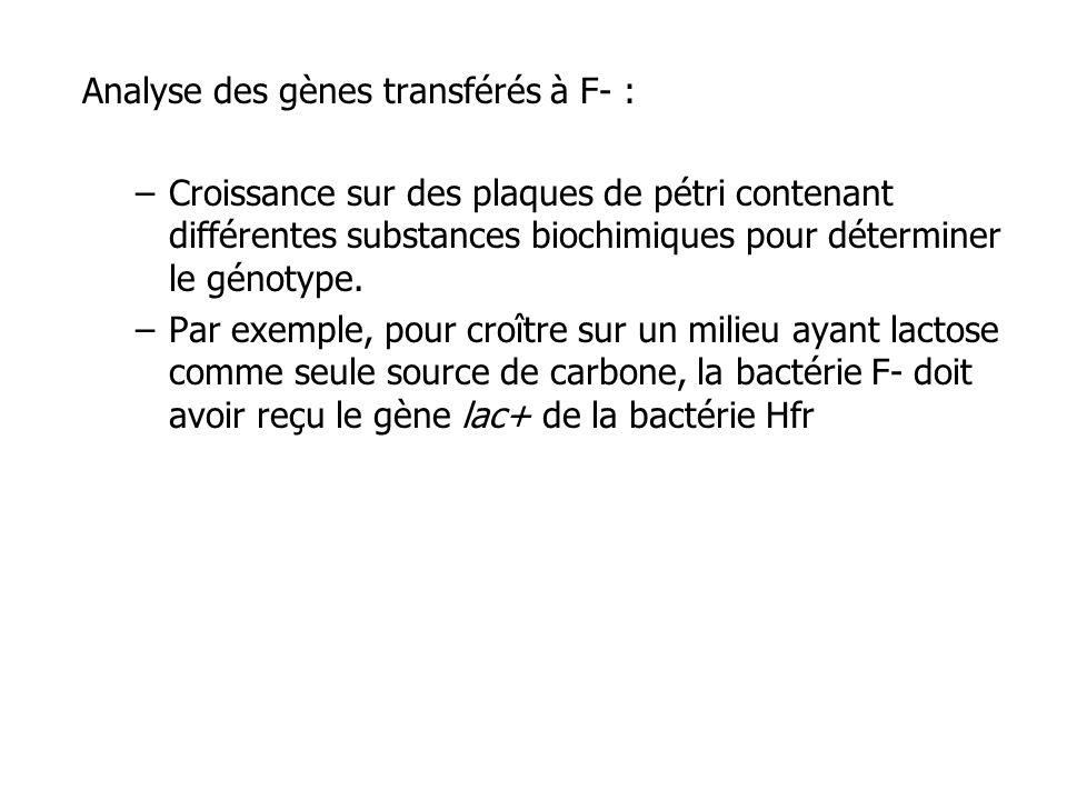 Analyse des gènes transférés à F- : –Croissance sur des plaques de pétri contenant différentes substances biochimiques pour déterminer le génotype. –P