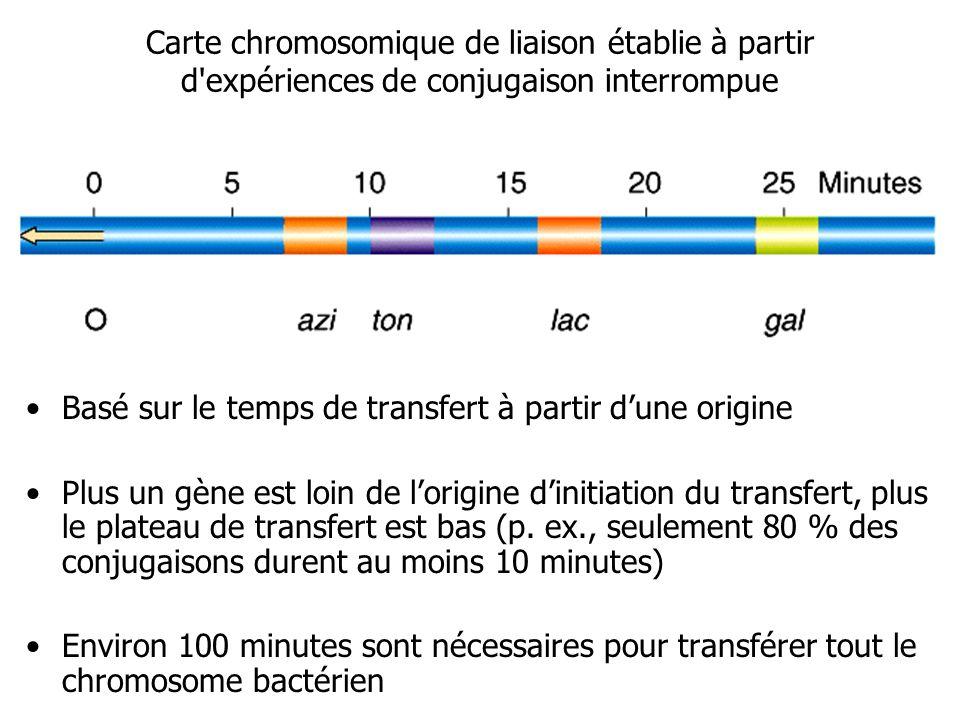 Carte chromosomique de liaison établie à partir d'expériences de conjugaison interrompue Basé sur le temps de transfert à partir dune origine Plus un