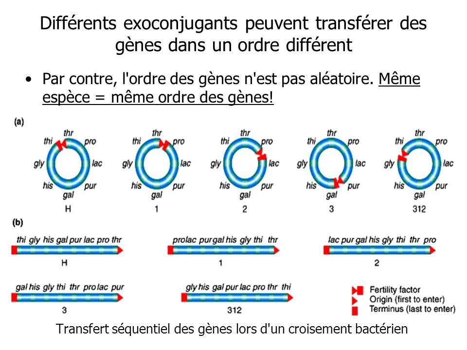 Différents exoconjugants peuvent transférer des gènes dans un ordre différent Transfert séquentiel des gènes lors d'un croisement bactérien Par contre