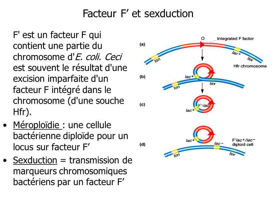 Facteur F et sexduction F' est un facteur F qui contient une partie du chromosome d'E. coli. Ceci est souvent le résultat d'une excision imparfaite d'