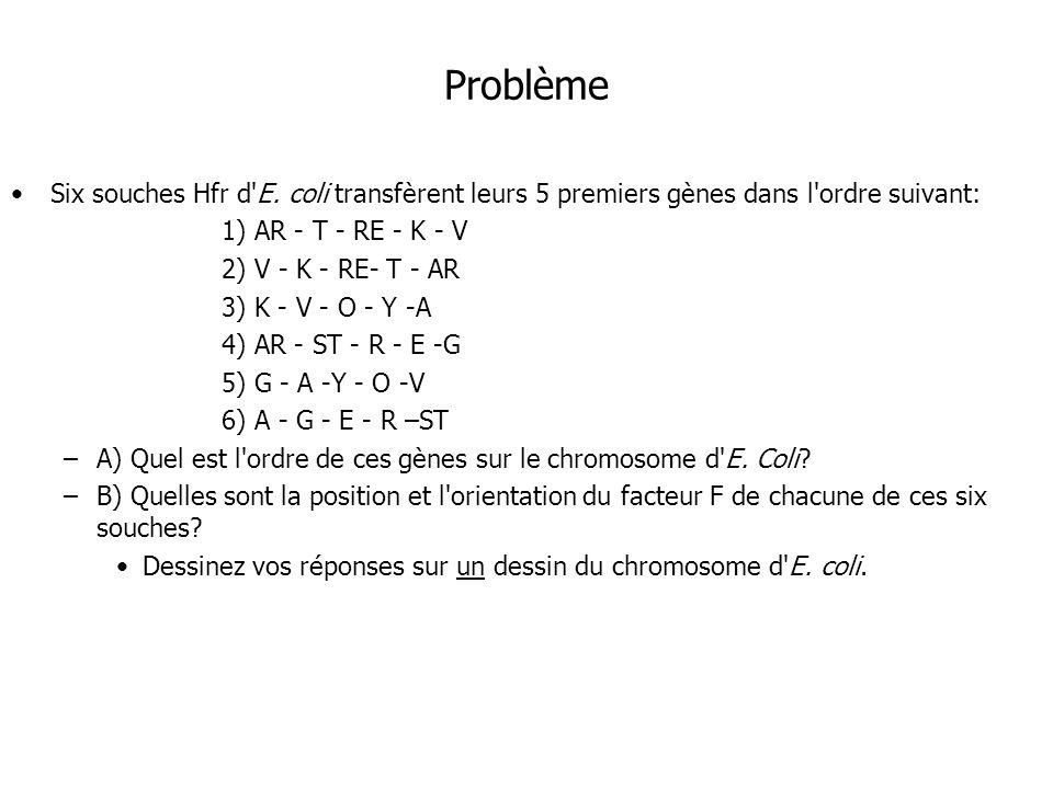 Problème Six souches Hfr d'E. coli transfèrent leurs 5 premiers gènes dans l'ordre suivant: 1) AR - T - RE - K - V 2) V - K - RE- T - AR 3) K - V - O