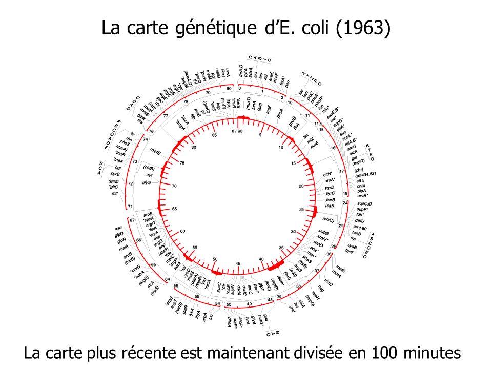 La carte génétique dE. coli (1963) La carte plus récente est maintenant divisée en 100 minutes