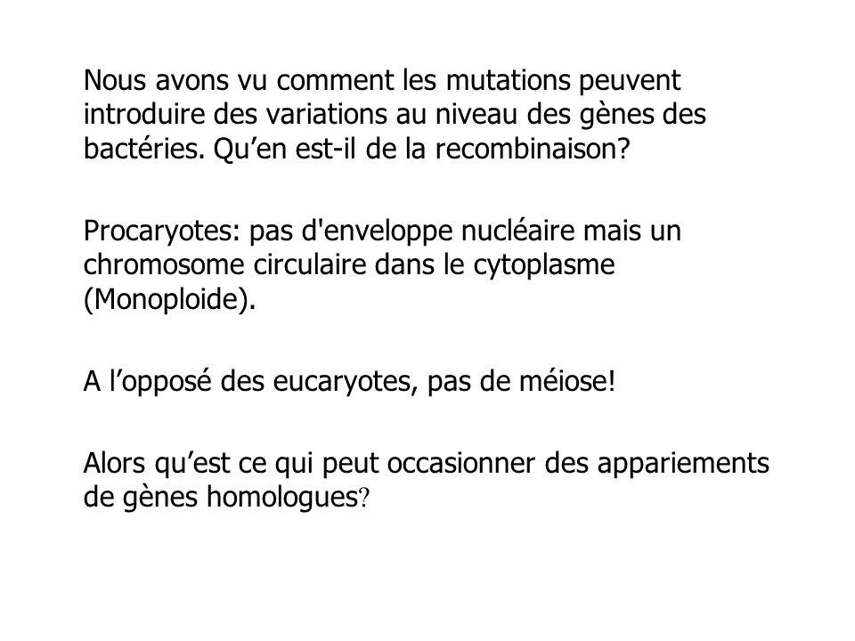Il y a 3 façons d introduire un fragment dADN ou une deuxième copie d un gène dans une bactérie.