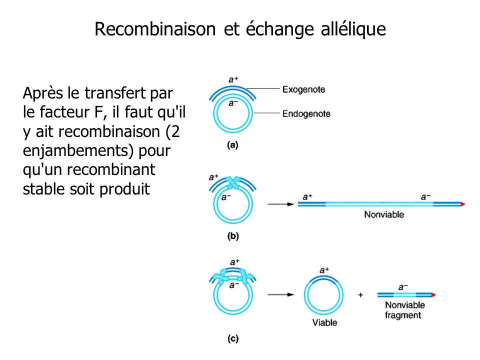 Après le transfert par le facteur F, il faut qu'il y ait recombinaison (2 enjambements) pour qu'un recombinant stable soit produit Recombinaison et éc