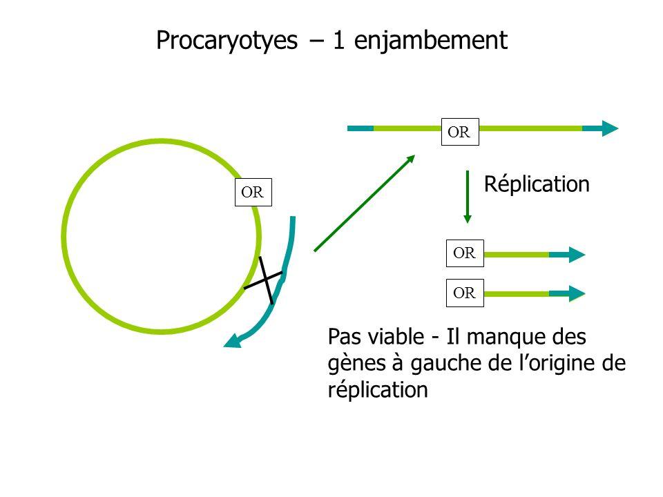 Procaryotyes – 1 enjambement OR Réplication OR Pas viable - Il manque des gènes à gauche de lorigine de réplication OR