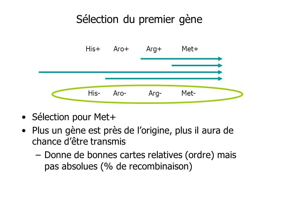 Sélection du premier gène Sélection pour Met+ Plus un gène est près de lorigine, plus il aura de chance dêtre transmis –Donne de bonnes cartes relativ