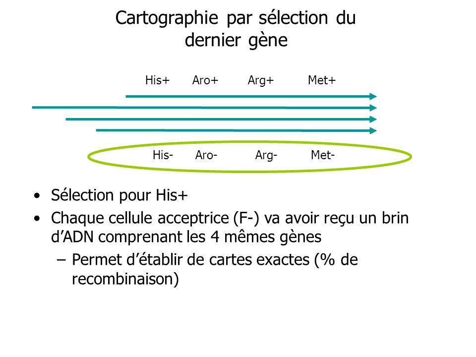 Cartographie par sélection du dernier gène Sélection pour His+ Chaque cellule acceptrice (F-) va avoir reçu un brin dADN comprenant les 4 mêmes gènes