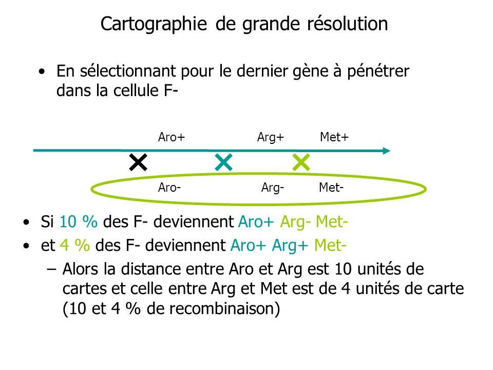 Cartographie de grande résolution En sélectionnant pour le dernier gène à pénétrer dans la cellule F- Aro+ Arg+ Met+ Aro- Arg- Met- Si 10 % des F- dev