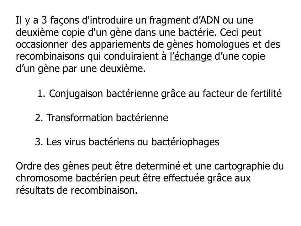 Il y a 3 façons d'introduire un fragment dADN ou une deuxième copie d'un gène dans une bactérie. Ceci peut occasionner des appariements de gènes homol