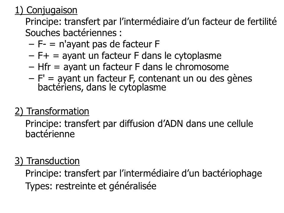 1) Conjugaison Principe: transfert par lintermédiaire dun facteur de fertilité Souches bactériennes : –F- = n'ayant pas de facteur F –F+ = ayant un fa