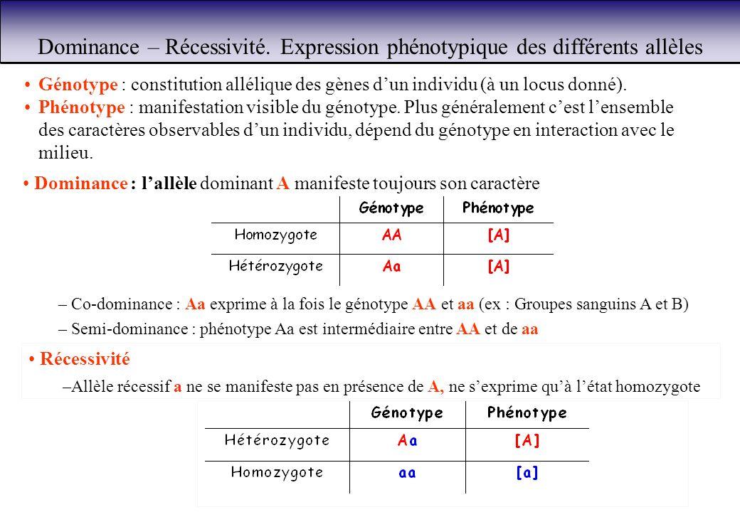 Dominance – Récessivité. Expression phénotypique des différents allèles Dominance : lallèle dominant A manifeste toujours son caractère Récessivité –A