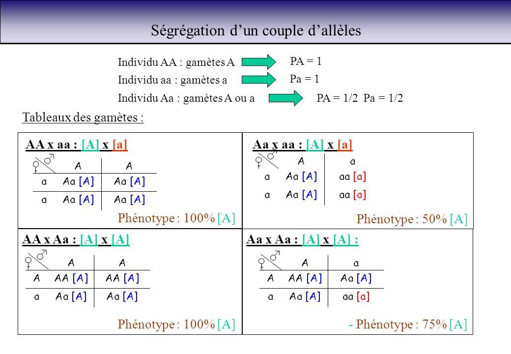 Ségrégation dun couple dallèles Individu AA : gamètes A PA = 1 Individu aa : gamètes a Pa = 1 Individu Aa : gamètes A ou aPA = 1/2 Pa = 1/2 Tableaux d
