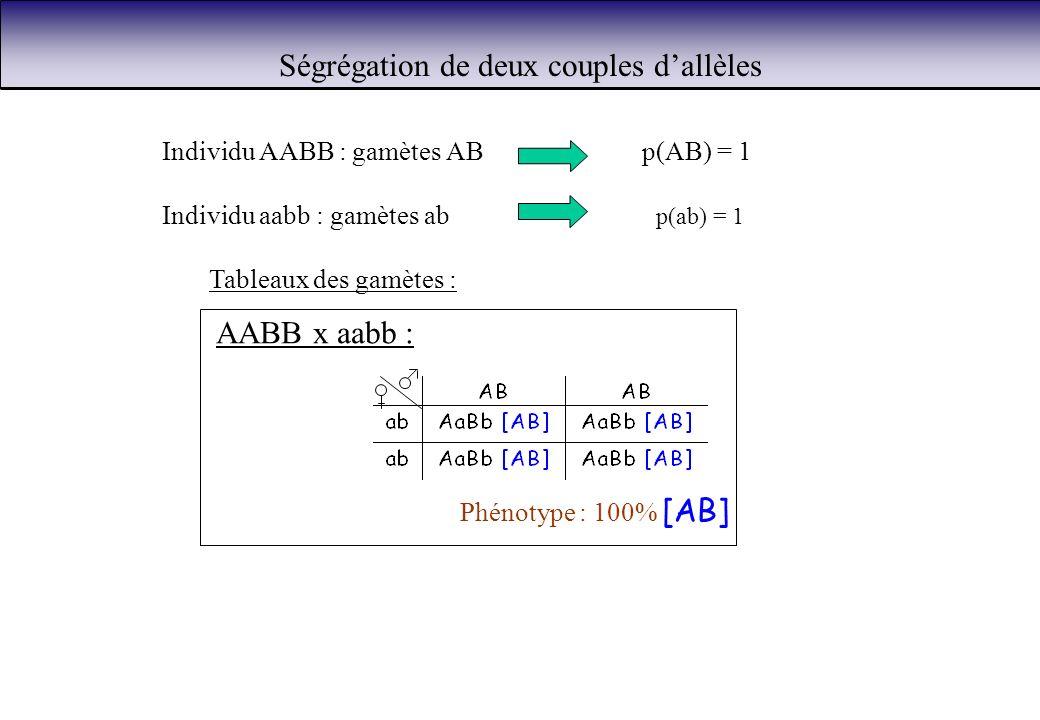 Ségrégation de deux couples dallèles Individu AABB : gamètes ABp(AB) = 1 Individu aabb : gamètes ab p(ab) = 1 Tableaux des gamètes : AABB x aabb : Phé