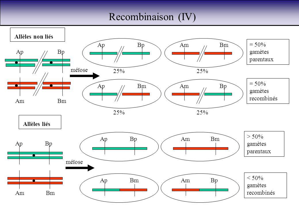 25% Ap AmBm Bp méïose ApBp ApBm AmBm AmBp > 50% gamètes parentaux < 50% gamètes recombinés Allèles liés Recombinaison (IV) Ap BmAm Bp ApBmAm BmApBpAm