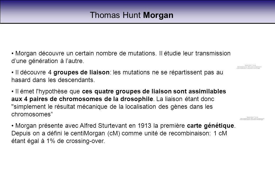 Thomas Hunt Morgan Morgan découvre un certain nombre de mutations. Il étudie leur transmission dune génération à lautre. Il découvre 4 groupes de liai