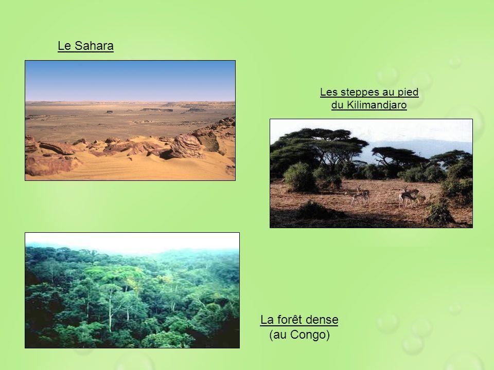Le Sahara La forêt dense (au Congo) Les steppes au pied du Kilimandjaro