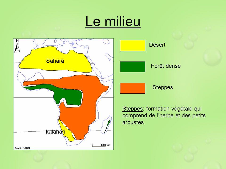 Le milieu Désert kalahari Sahara Forêt dense Steppes Steppes: formation végétale qui comprend de lherbe et des petits arbustes.