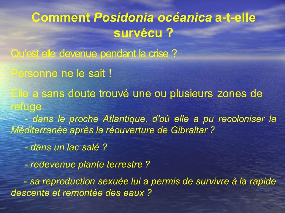 Comment Posidonia océanica a-t-elle survécu ? Quest elle devenue pendant la crise ? Personne ne le sait ! Elle a sans doute trouvé une ou plusieurs zo
