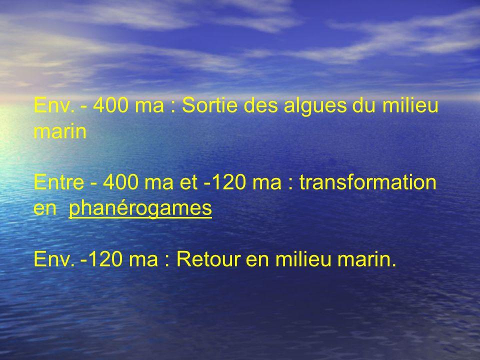 Env. - 400 ma : Sortie des algues du milieu marin Entre - 400 ma et -120 ma : transformation en phanérogames Env. -120 ma : Retour en milieu marin.