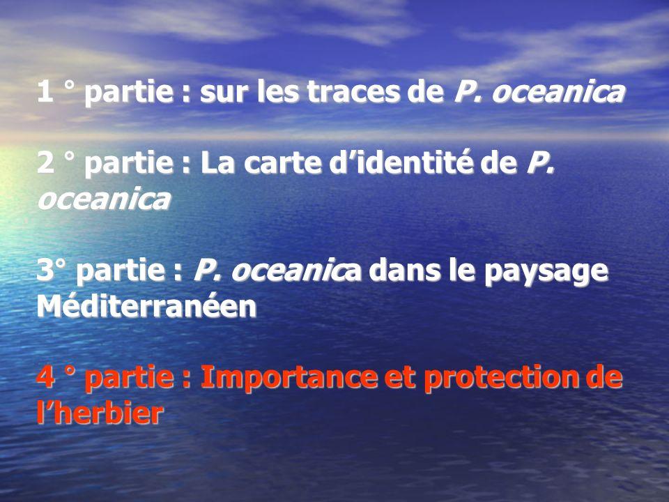 1 ° partie : sur les traces de P. oceanica 2 ° partie : La carte didentité de P. oceanica 3° partie : P. oceanica dans le paysage Méditerranéen 4 ° pa