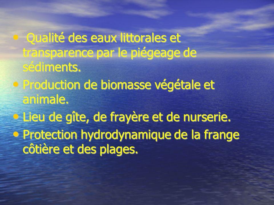 Qualité des eaux littorales et transparence par le piégeage de sédiments. Qualité des eaux littorales et transparence par le piégeage de sédiments. Pr